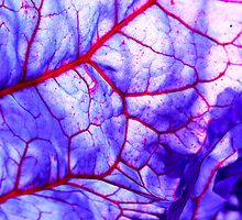 bloodstream abstract III by blackpool