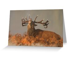 Red Deer in the Mist Greeting Card