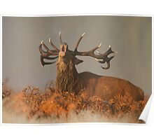 Red Deer in the Mist Poster