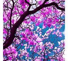 purple tree XIX Photographic Print