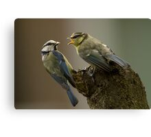 Busy Blue Tit Canvas Print