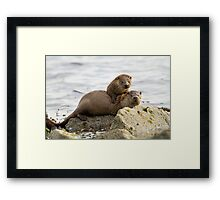 Otter Mum with a Cub  Framed Print