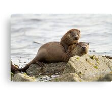 Otter Mum with a Cub  Canvas Print