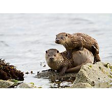 Otter Mum With a Playful Cub Photographic Print