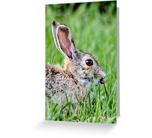 Western Cottontail Greeting Card