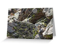 Alone on the Rocks Greeting Card