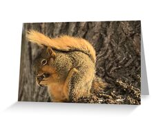 Frozen Nut Greeting Card