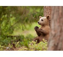 Tired Cub Photographic Print