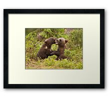 Bear Cubs Playing Framed Print