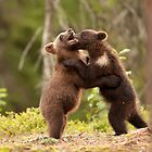 Brown Bear Cubs Play Fighting by dgwildlife