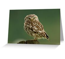 Little Owl Greeting Card