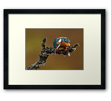 Ready to Dive Framed Print