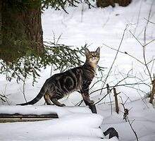 Winter Prowl by Mikell Herrick