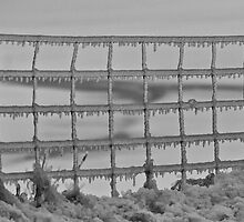 Fenced In... by Scott Howard