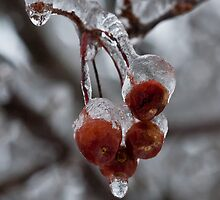 Frozen Apples! by Scott Howard