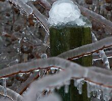 Frozen Land by Scott Howard