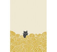 Cat and Wool Yarn Photographic Print