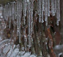 Iced Fences... by Scott Howard