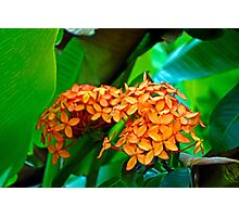 Tropical Orange  Photographic Print