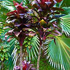 Tropical Reds and Greens  by Robert Meyers-Lussier