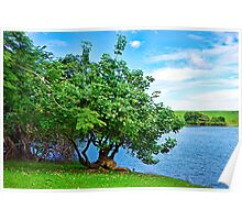 Tree and Waokele Pond  Poster
