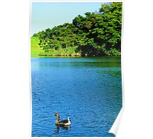 Waokele Pond and Goose  Poster