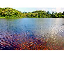 Waokele Pond and Koi Study 7 Photographic Print