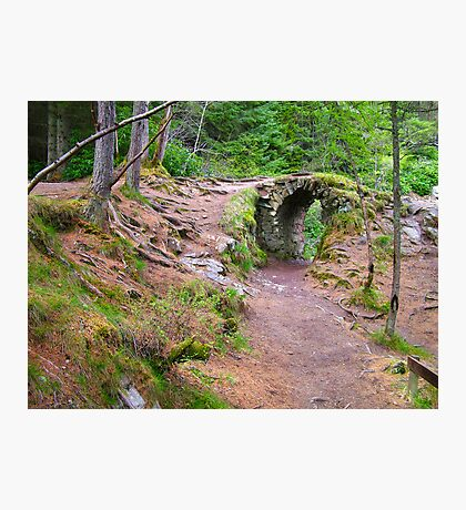 Bruar Walk Photographic Print