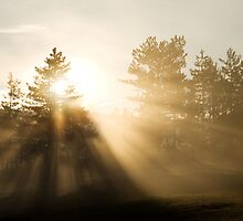 Sunrise bursting through trees and mist by Ian Middleton