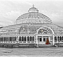 The Palm House Sefton Park by DavidWHughes