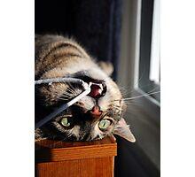 Catfish Photographic Print