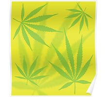 Cannabis Leaves Poster