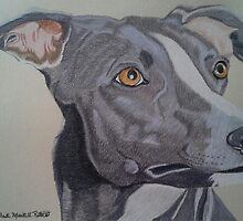 Whippet - Grey and White by Anita Meistrell Putman