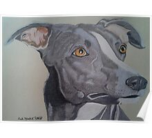 Whippet - Grey and White Poster