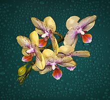 Orchid Flower Unusual Colors Fine Art by Gotcha29