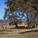 High Country Cattle by WendyJC