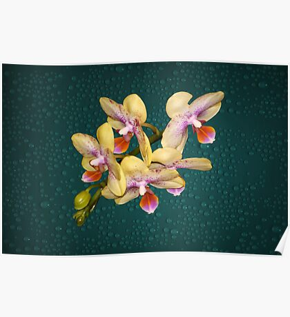 Orchid Flower Unusual Colors Natural Poster