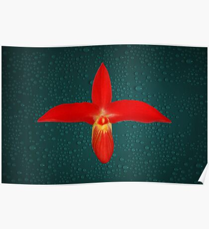 Bright Red Orchid Natural Color Poster