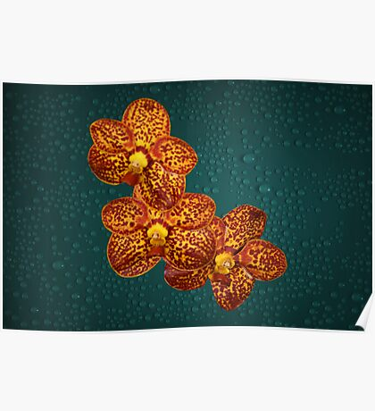 Orchids Brown Yellow Natural Poster