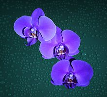 Orchid Flowers Deep Purple Fine Art by Gotcha29