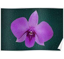 Large Orchid Deep Purple Color Poster