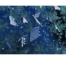 Frosty Garden Photographic Print