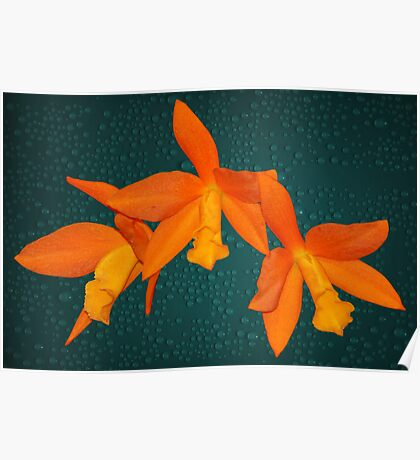 Orchid Bright Orange Natural Color Poster