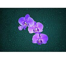 Purple Award Winning Orchids Light Painting Photographic Print