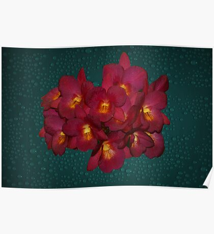 Red Yellow Orchids Natural Poster