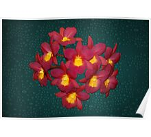 Orchid Amazing Red Yellow Flowers Poster