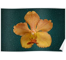 Tan Yellow Orchid Single Flower Poster