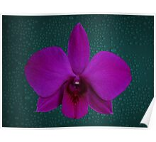 Orchid Single Large Purple Flower Poster