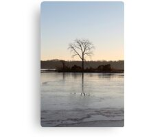 Bald eagle roost Canvas Print