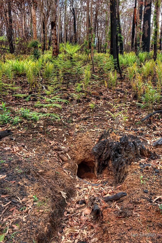 Mt Irvine - Wombat Hole by Ian English